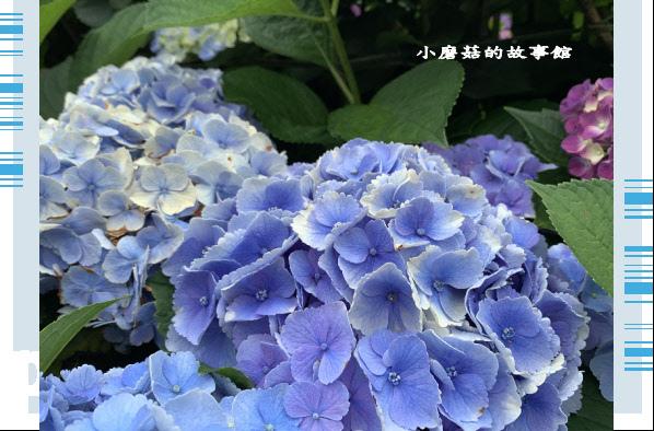 109.6.3.(61)財福繡球花田.JPG