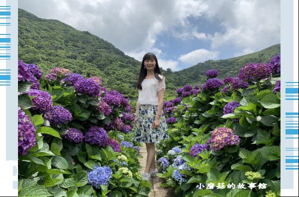 109.6.3.(62)財福繡球花田.JPG