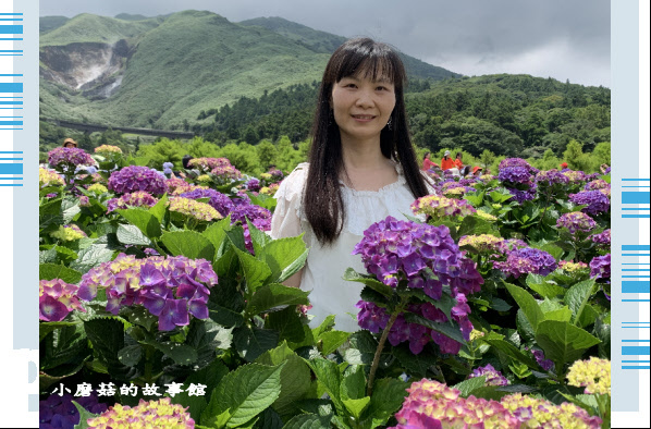 109.6.3.(139)財福繡球花田.JPG