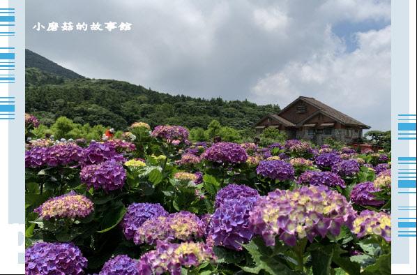 109.6.3.(142)財福繡球花田.JPG