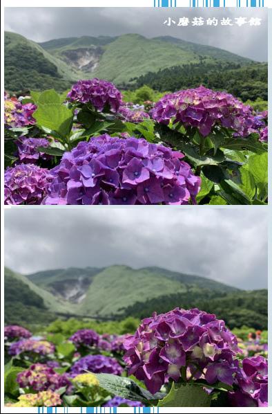 109.6.3.(149)財福繡球花田.JPG