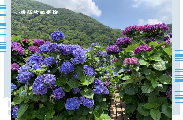 109.6.3.(205)財福繡球花田.JPG