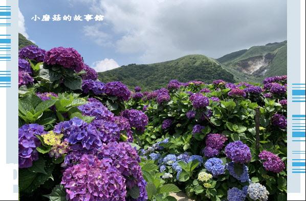 109.6.3.(206)財福繡球花田.JPG