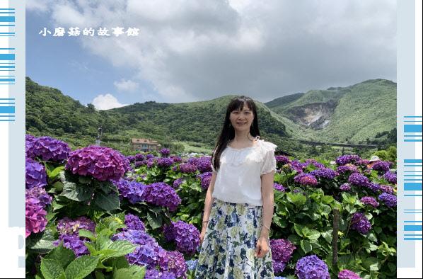109.6.3.(210)財福繡球花田.JPG