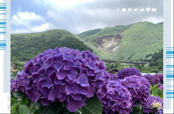 109.6.3.(233)財福繡球花田.JPG
