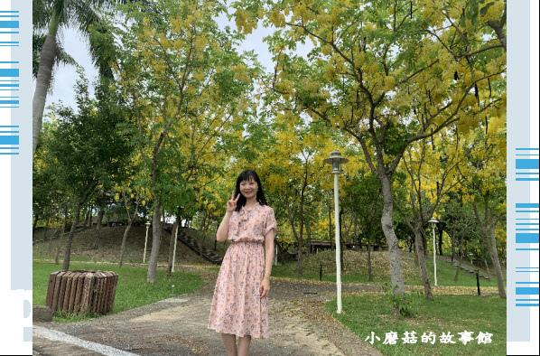 109.6.7.(28)嘉義長庚科技大學旁的阿勃勒.JPG