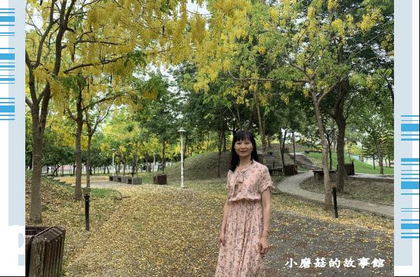 109.6.7.(90)嘉義長庚科技大學旁的阿勃勒.JPG