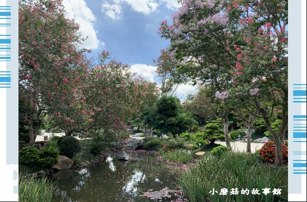 109.6.17.(31)台灣銘園庭園美術館‧紫薇花.JPG