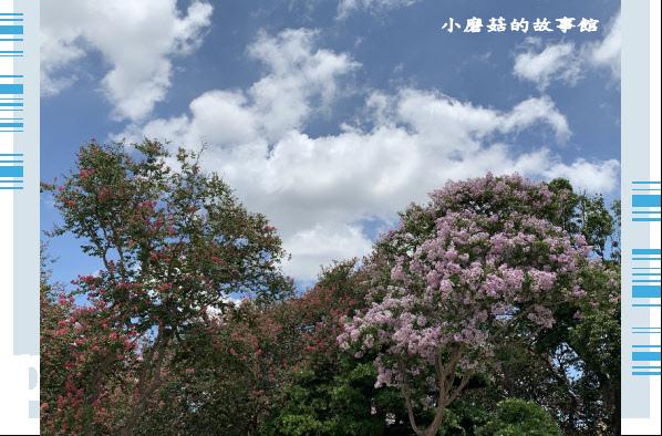 109.6.17.(93)台灣銘園庭園美術館‧紫薇花.JPG