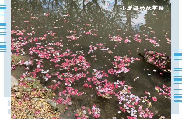 109.6.17.(123)台灣銘園庭園美術館‧紫薇花.JPG