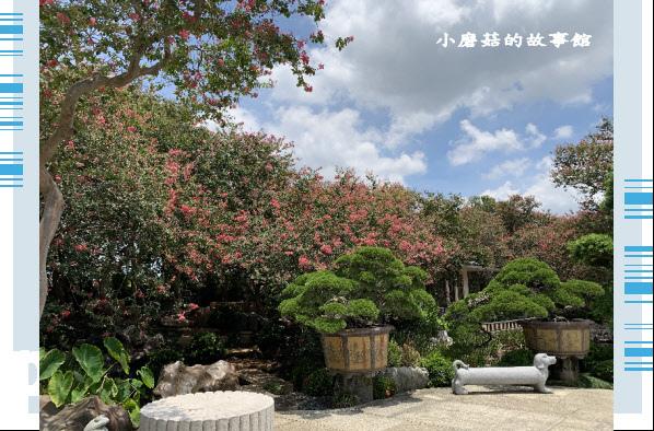 109.6.17.(137)台灣銘園庭園美術館‧紫薇花.JPG