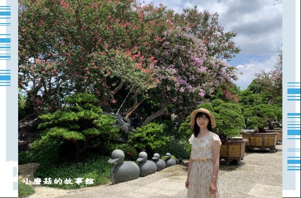 109.6.17.(150)台灣銘園庭園美術館‧紫薇花.JPG