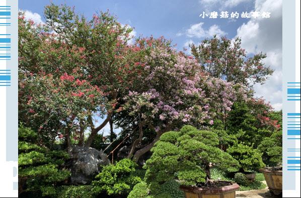 109.6.17.(154)台灣銘園庭園美術館‧紫薇花.JPG