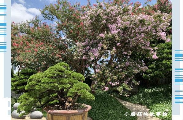 109.6.17.(155)台灣銘園庭園美術館‧紫薇花.JPG