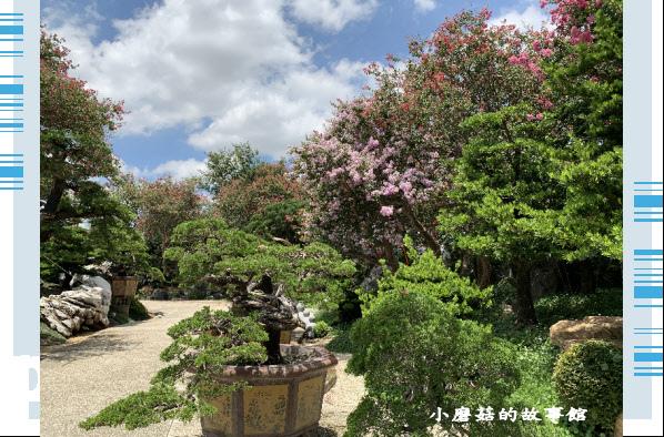 109.6.17.(163)台灣銘園庭園美術館‧紫薇花.JPG