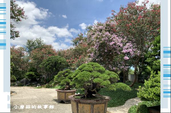 109.6.17.(166)台灣銘園庭園美術館‧紫薇花.JPG
