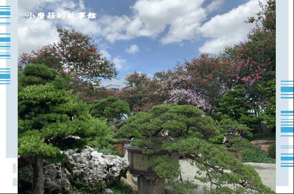 109.6.17.(169)台灣銘園庭園美術館‧紫薇花.JPG