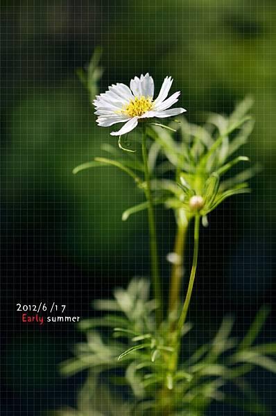 清晨。小白花