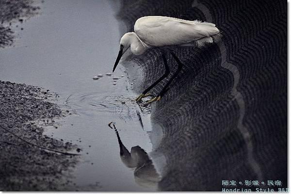 Birds (13).JPG