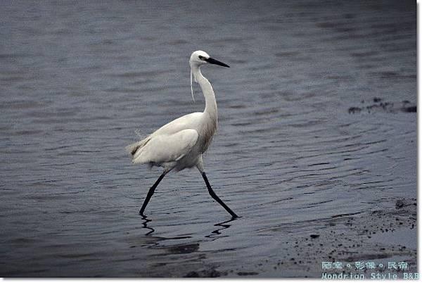 Birds (4).JPG