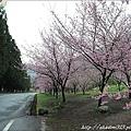 2011 武陵櫻花祭 112.JPG