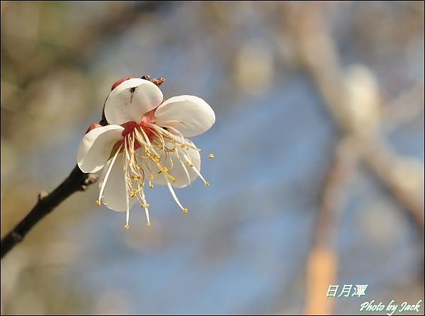 2011_合歡群峰跨年遊 513.JPG