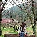 2011 武陵櫻花祭 194.JPG