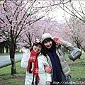 2011 武陵櫻花祭 120.JPG