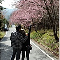 2011 武陵櫻花祭 348.JPG