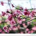春節遊 002