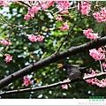 春節遊 003