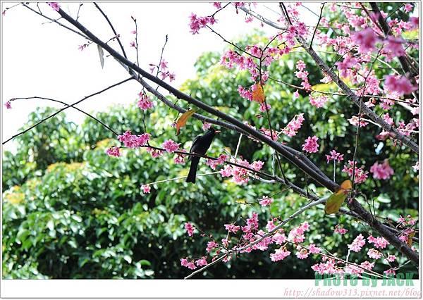 春節遊 006
