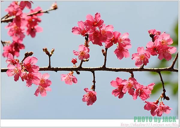 春節遊 010