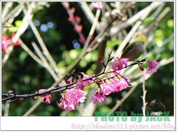 春節遊 024