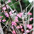 春節遊 026