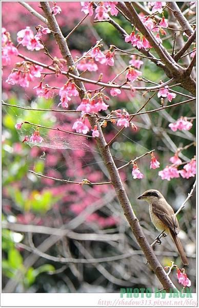 春節遊 035