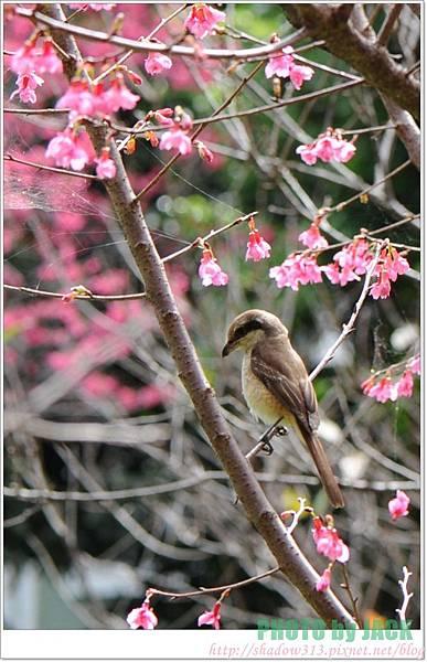 春節遊 036