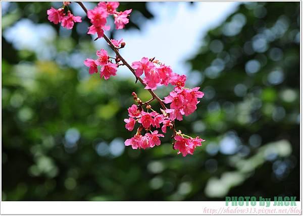 春節遊 047