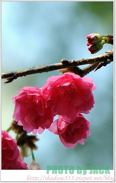 春節遊 052
