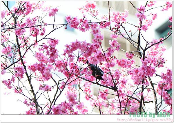 春節遊 072