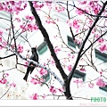 春節遊 073