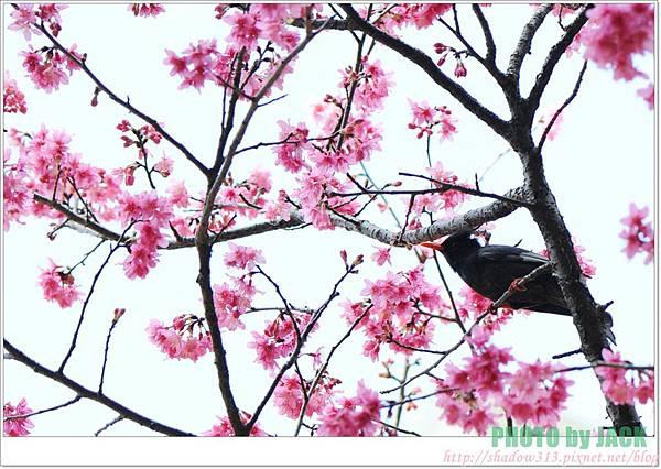 春節遊 077