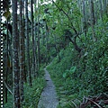 梅嶺登山步道 037.JPG
