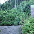 梅嶺登山步道 038.JPG