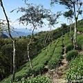 梅嶺登山步道 107.JPG