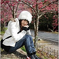 2011 武陵櫻花祭 309.JPG