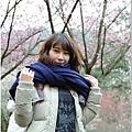2011 武陵櫻花祭 227.JPG