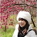 2011 武陵櫻花祭 296.JPG
