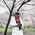 2011 武陵櫻花祭 113.JPG