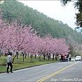 2011 武陵櫻花祭 205.JPG